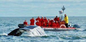 Roadtrip Tadoussac baleines